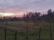 Купить земельный участок в пригороде Батуми, Грузия. Фото 1