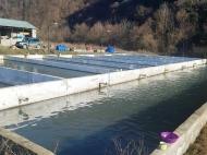 Рыбоводное хозяйство. Продается действующий сельскохозяйственный комплекс.  Фото 1