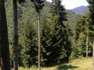 Земельный участок с коттеджами  в сосновом лесу в курортном районе в Борджоми, Грузия. Фото 5