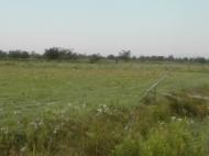 Земельный участок сельхозназначения в Ланчхути,Грузия. Фото 7