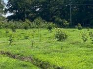 Продается действующий сельскохозяйственный комплекс. Грузия. Фото 8