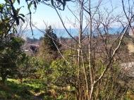 Дом с участком и видом на море на Зеленом Мысе, Батуми, Грузия. Фото 3