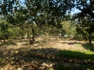 Ground area ( A plot of land ) for sale at the seaside of Batumi Photo 4