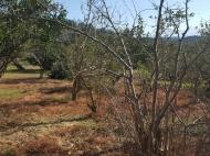 Земельный участок на берегу реки Чарнали, Батуми. Фото 6