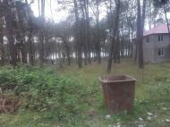 Земельный участок в Шекветили Фото 1