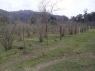 Земельный участок в Гонио, Грузия. Фото 1