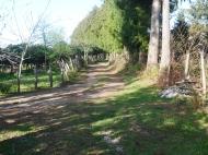 Земельный участок в Батуми с мандариновым садом Фото 5