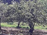 Продается земельный участок в пригороде Батуми. Фото 3