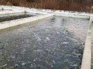 Рыбоводное хозяйство. Продается действующий сельскохозяйственный комплекс.  Фото 6