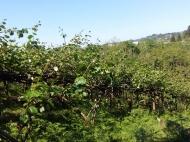 Продается 2-х этажный дом. Хороший фруктовый сад. Хороший урожай Фото 18