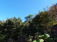Земельный участок в Махинджаури с видом на море и на горы. Фото 4