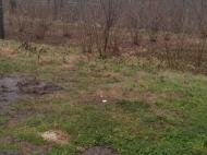 Земельный участок в курортной зоне Кобулети, Грузия. Фото 3