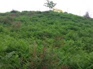 Продается земельный участок в Чакви,Грузия. Фото 2