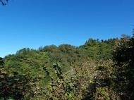 Земельный участок в Махинджаури с видом на море и на горы. Фото 5