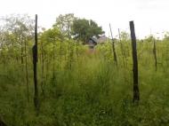 სასწრაფოდ! იყიდება მიწის ნაკვეთი სახლთან ერთად ს. ცაიში, ზუგდიდი. საქართველო. ფოტო 8
