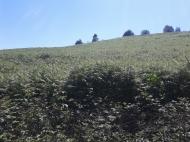 Земельный участок в Ланчхути. Купить земельный участок в Грузии. Фото 2