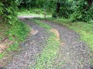 Земельный участок в Квариати.Аджария Грузия Фото 3