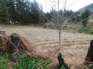 Земельный участок в Батуми с природным родником Фото 3