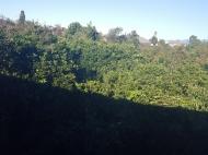 იყიდება კერძო სახლი მანდარინის ბაღით ახალ ბულვარში. ბათუმი. საქართველო. ფოტო 1