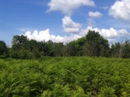 Земельный участок в Ланчхути. Купить земельный участок в Грузии. Фото 4