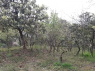 Продажа земли на Зеленом мысе Аджария Грузия Фото 6