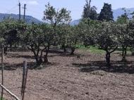 Продается земельный участок в пригороде Батуми. Фото 1