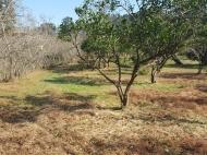 Земельный участок на берегу реки Чарнали, Батуми. Фото 5