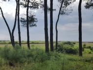 Земельный участок у Черного моря в Уреки. Участок на берегу реки в Уреки, Грузия. Фото 7