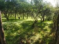 Земельный участок в Батуми с мандариновым садом Фото 2