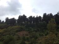 Участок с видом на море в Цихисдзири. Купить участок в Цихисдзири, Грузия. Фото 3