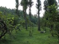 Продается земельный участок в Батуми!  Фото 6