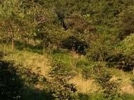 Участок с видом на реку и горы в окрестностях Батуми. Эрге,Грузия. Фото 4