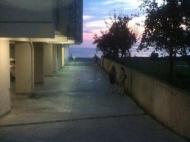 იყიდება ბინა ზღვის სანაპიროზე გონიოში. საქართველო ფოტო 16