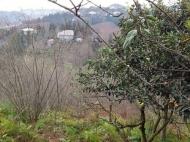 Земельный участок с фруктовым и мандариновым садом у моря в Цихисдзири, Грузия. Фото 3