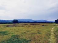 Земельный участок на продажу в Самтредиа, Грузия. Фото 4