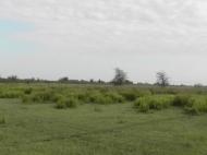 Земельный участок сельхозназначения в Ланчхути,Грузия. Фото 8