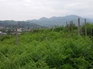 Продается земельный участок в Чакви,Грузия. Фото 4
