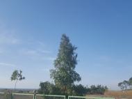 Земельный участок у Черного моря в Уреки. Участок на берегу реки в Уреки, Грузия. Фото 3