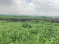 Купить земельный участок в пригороде Тбилиси. Фото 3