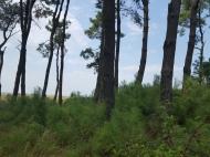 Земельный участок у Черного моря в Уреки. Участок на берегу реки в Уреки, Грузия. Фото 5