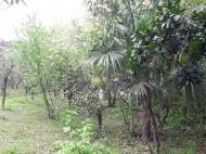 Продажа земли на Зеленом мысе Аджария Грузия Фото 2