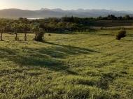 Продается земельный участок у озера Базалети, Грузия. Фото 9