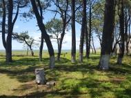 Участок на берегу моря в Шекветили, Грузия. Фото 5