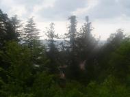 Земельный участок с видом на море в Грузии Фото 6