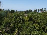 Дома, котеджи, дачи в Цихисдзири, Аджария, Грузия. Природный родник. Фото 1